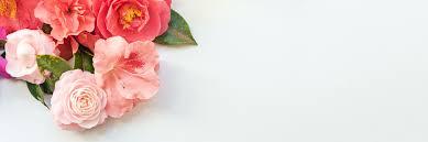 Azalea Size Chart Azalea Care Guide Growing Information Tips Proflowers Blog