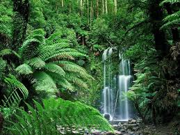 73+] Tropical Rainforest Wallpaper on ...