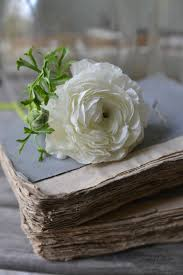 flowers ranunculus and old books
