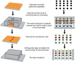 Microfluidics For Cell Based High Throughput Screening Platforms A