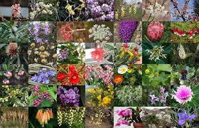 top 60 beautiful winter flowers with