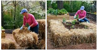 straw bale urban gardening ideas and getting started right woman moving a hay bale