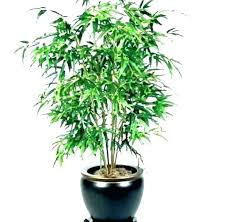 houseplant for low light spider plants very led growth houseplants house trees good plan reddit