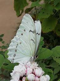 Tropique Du Papillon - Home
