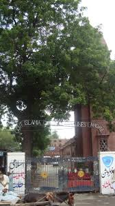 bhagat singh study chaman lal  government islamia college and the neem tree graffti of the jamiat on the wall