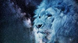 preview wallpaper lion muzzle starry sky stars photo king of beasts