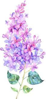 сирень живопись тату сирени акварель и татуировка цветы