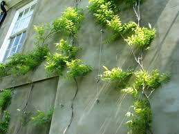 Best 25 Evergreen House Ideas On PinterestWall Climbing Plants Crossword