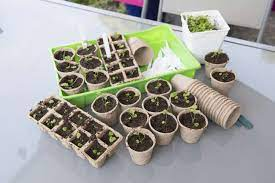 seed starting vegetables in march