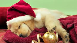 cute christmas puppies. Simple Cute Enlarge Wallpaper And Download With Cute Christmas Puppies C
