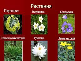 растения красной книги казахстана фото с названиями