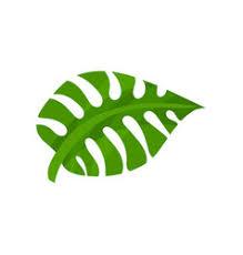 <b>Monstera Leaf</b> Cartoon Vector Images (over 650)