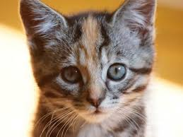 cat kitten pet cute