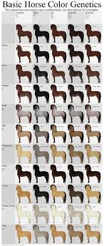 Dachshund Color Chart Basic Horse Color Genetics Chart By Wouv Hippology 4h