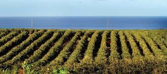 Hawaii coffee history maps showing kona coffee growing regions and plantation areas on hawaii. Where Is The Kona Coffee Blog Kauai Coffee Company