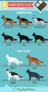German Shepherds Come In All Varieties Of Beautiful Colors