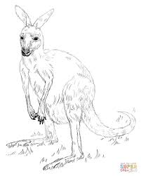 Small Picture Kangaroos coloring pages Free Coloring Pages