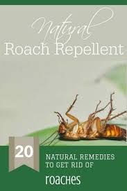 home remes to get rid of roaches