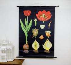 Beautiful Vintage Botanical Pull Down Chart Countryliving