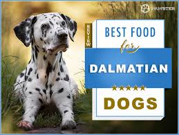 6 Best Foods To Feed An Adult And Puppy Dalmatian In 2019