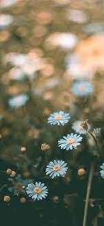 Best Flower iPhone X HD Wallpapers ...