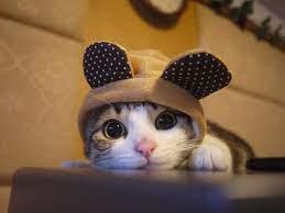 Cute kitten wallpaper