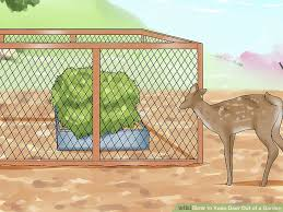 how to keep deer away from garden. image titled keep deer out of a garden step 10 how to away from d