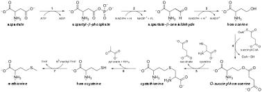 Foods Low In Methionine Chart Methionine Wikipedia