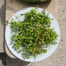 Grape 11  Grape In Garden Iran Khorasan Razavi Gonabad  Fruit Iranian Fruit Trees