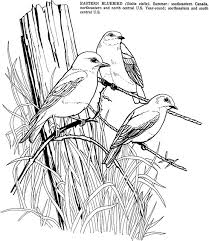 Birds Fun Kit Eastern Bluebird Coloring Page This Is A Fre Flickr