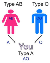 parent blood types chart understanding genetics
