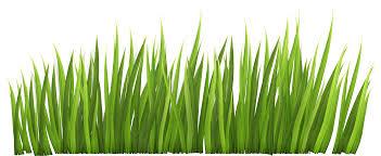 grass.  Grass View Full Size  On Grass