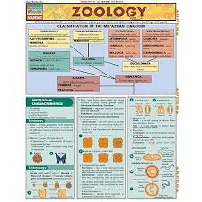 Science Related Chart Zoology Chart