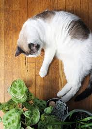 the best houseplants for you and your pets