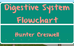 Digestive System Flowchart By Hunter Creswell On Prezi