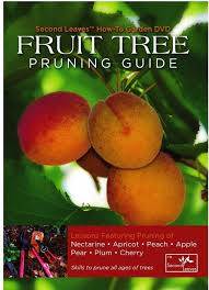 4 Benefits Of Thinning Fruit Trees  Stark Brou0027sCherry Fruit Tree Care