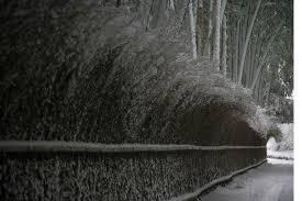 雪の日嵐山から竹林の小径を歩く 日本国内京都特派員ブログ 地球