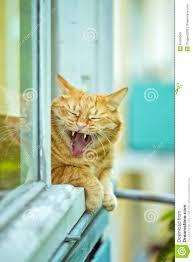 Eine Orange Gähnende Katze Auf Dem Fenster Sommertag Stockfoto