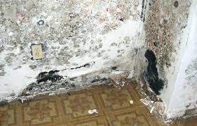 how to get rid of mold in basement black mold removal mold in basement walls removal
