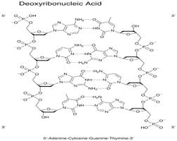 molecular biology assignment help biology homework help molecular biology