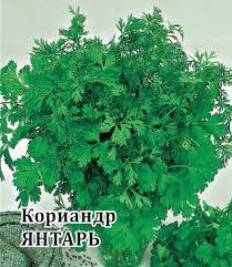 <b>Семена Кориандр Янтарь</b>, 25г, Гавриш по цене 17,60 руб ...