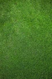 green grass field animated. Green Grass Field Background Animated U
