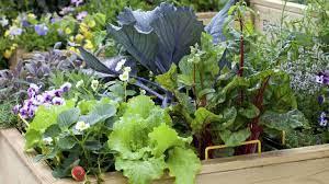 small vegetable garden ideas 10 layout