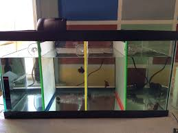 picture of fish tank dividers