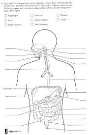 Worksheets On Digestive System Of Human Body | Homeshealth.info