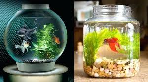 fish tank ideas fish aquarium design ideas archives design diy betta fish tank ideas fish tank