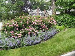Small Picture Unique Rose Garden Ideas Pictures 70 For Your with Rose Garden