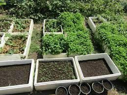 ใช้พื้นที่ 300 ตารางวา ปลูกผักปลอดสารพิษ พร้อมทำปุ๋ยคอกไว้ใช้เอง  ทำเงินได้ทั้งเดือน - เทคโนโลยีชาวบ้าน