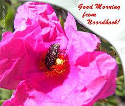 good morning from noordhoek by bianca gubalke photography