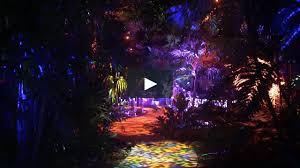the nightgarden at fairchild tropical botanic garden is making miami magical this holiday season on vimeo